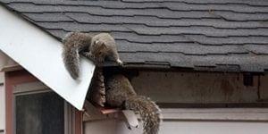 animal damage roof repairs