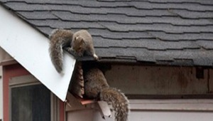 Animal roof Damage Repair Specialist company near me NJ